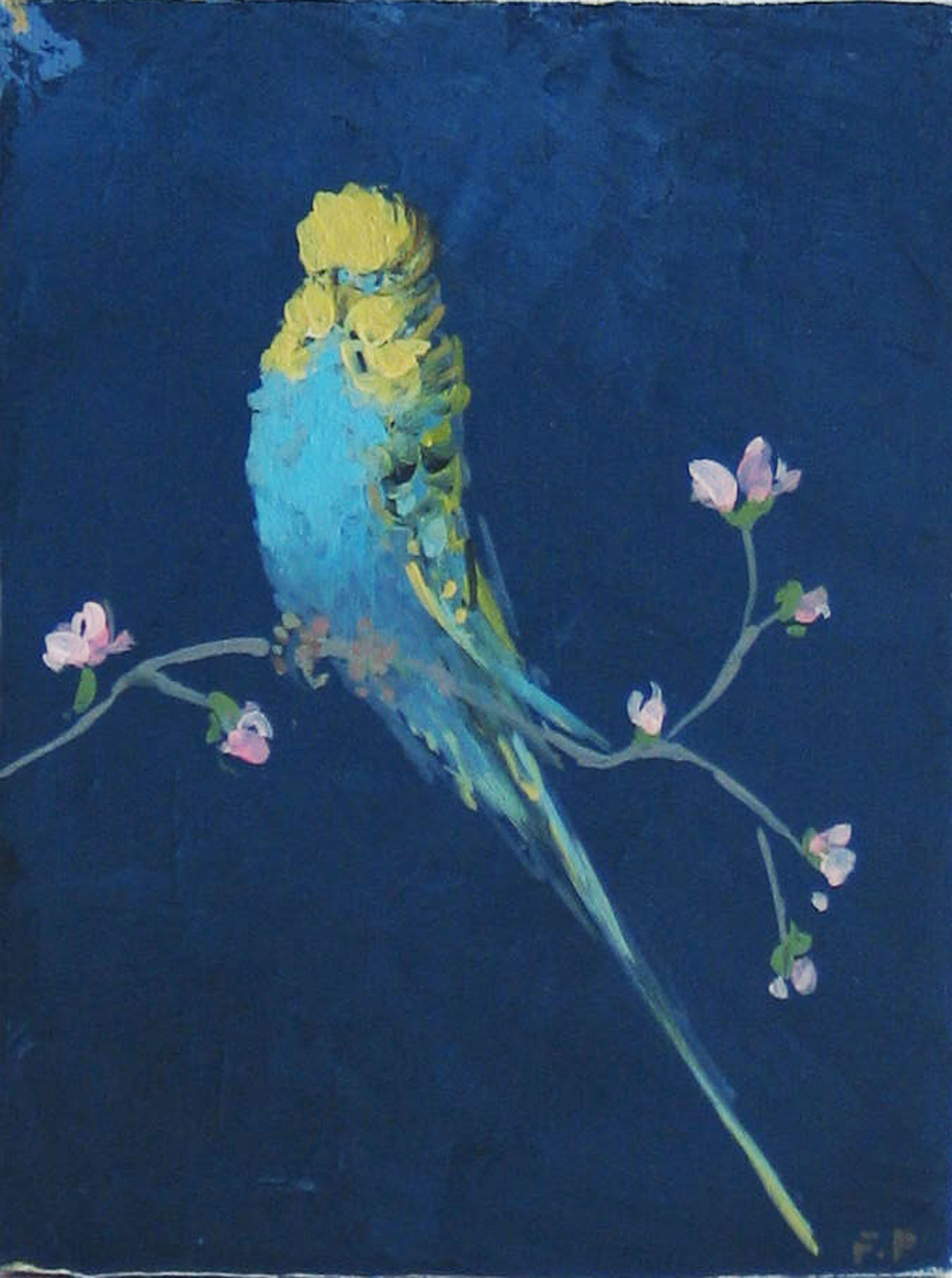 Budgie-with-blossom-on-blue-background-20cm-x-15cm