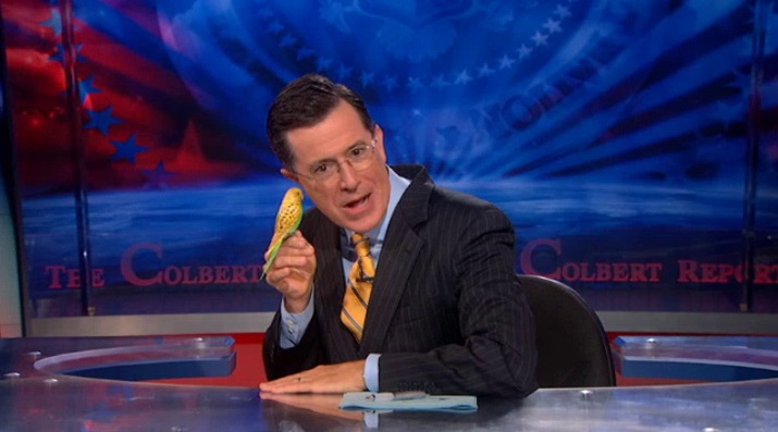 Rather Colbert report shaved head