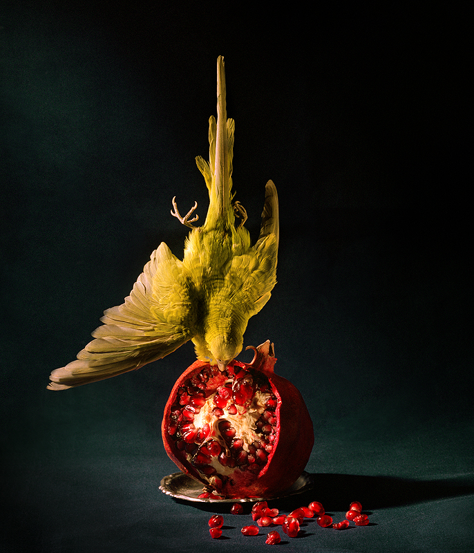 budgie and pomegranate