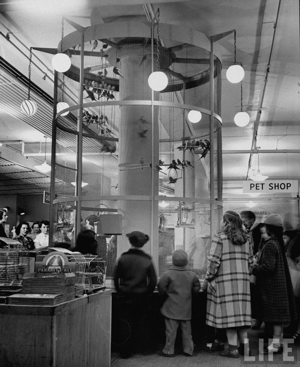 Budgies at Macy's department store, flying around in a large, high cylindrical cage, with trapezes for the birds to sit on 1953 - nina leen