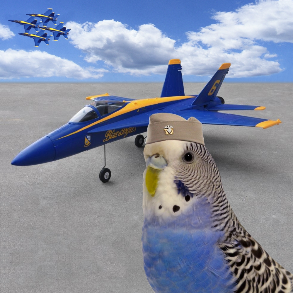 blueangelcoop