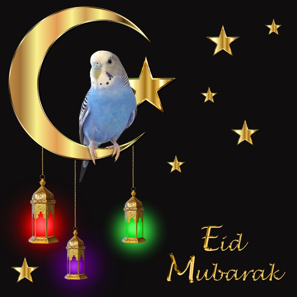 Search Main Menu Skip To Primary Content Skip To Secondary Content Post Navigation Previous Next Eid Al Fitr Posted On June 5 2019 By Michelle M This Entry Was Posted In Holiday Fun Uncategorized And Tagged Budgie Cooper Eid Al Fitr Eid